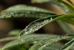 raindrops листьев Стоковое фото RF