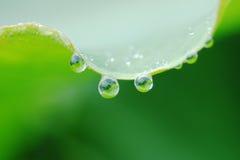raindrops листьев Стоковое Изображение