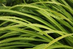 Raindrops на траве Стоковое Изображение RF