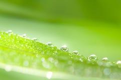 raindrops травы Стоковая Фотография