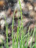 raindrops травы Стоковые Фотографии RF