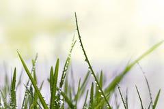 raindrops травы Стоковое Фото