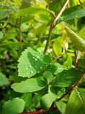 raindrops Στοκ Εικόνα