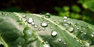 raindrops Obrazy Royalty Free