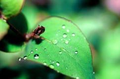 raindrops Obraz Stock