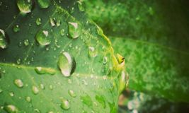 raindrops fotografia royalty free