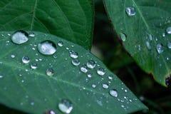 raindrops fotos de archivo