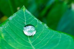 raindrops photographie stock