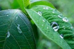 raindrops photographie stock libre de droits