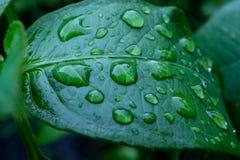 raindrops images libres de droits