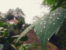 raindrops photo libre de droits