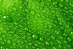 raindrops Стоковое Фото