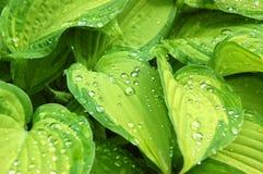 raindrops Royaltyfria Bilder