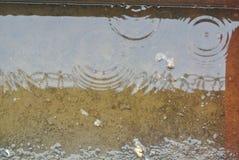 Raindrops fotografia royalty free