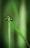 raindrops Стоковая Фотография RF