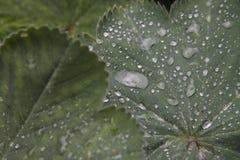 raindrops Стоковые Фотографии RF