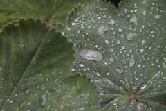 raindrops royaltyfria foton