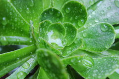 raindrops Foto de Stock Royalty Free