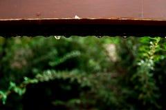 raindrops Стоковая Фотография