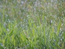 raindrops Obrazy Stock