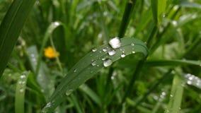 raindrops Obraz Royalty Free