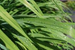 raindrops Fotografia de Stock