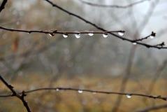 raindrops Immagini Stock Libere da Diritti