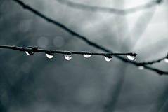 raindrops Immagine Stock Libera da Diritti