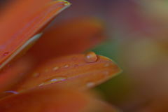 raindrops Στοκ Φωτογραφία