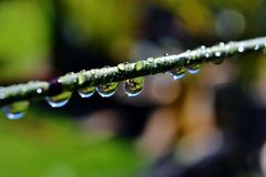 Raindrops on bamboo grass Stock Images