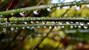 Raindrops on bamboo grass Stock Image