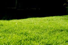 Raindrops on the beautiful green grass. Royalty Free Stock Photo
