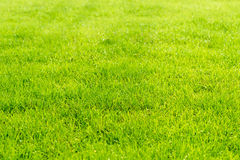 Raindrops on the beautiful green grass. Royalty Free Stock Images