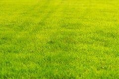 Raindrops on the beautiful green grass. Royalty Free Stock Photos