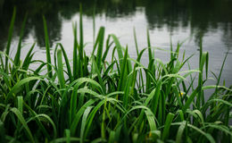 Raindrops on blades of grass Stock Photo