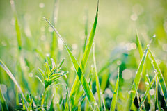 Raindrops on blades of grass Stock Images
