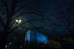 Raindrops on a branch illuminated by night street lamps with a c Royalty Free Stock Photo