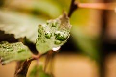Raindrops Royalty Free Stock Photography