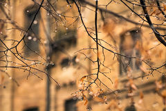 Raindrops on the branches without leaves in autumn Stock Photos