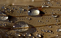 Raindrops on a brown leaf Stock Photos
