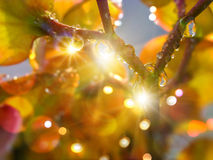 RAINDROPS ON CACTUS FLOWER-LEAF stock photos