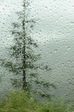 Raindrops on car window in forest Stock Photos