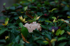 Raindrops or dew on a dry yellow leaf in autumn in the woods. Or Park Stock Photo