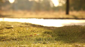 Raindrops dribble from trees while sun warms the earth after rain stock footage