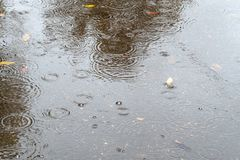Raindrops fall in puddle with leaves on road stock photo