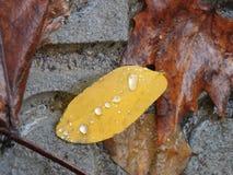 Raindrops on fallen leaves stock photos