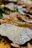 Rain drops on yellow leaves in autumn Park royalty free stock photo