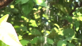Raindrops Falling on Tree Branches (1) stock video footage