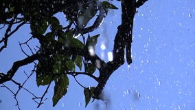 Raindrops Falling on Tree Branches (4) stock footage