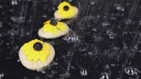 Raindrops falling on the white stones and yellow flowers stock footage